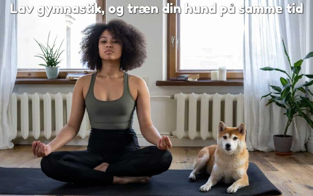 Lav gymnastik, og træn din hund på samme tid